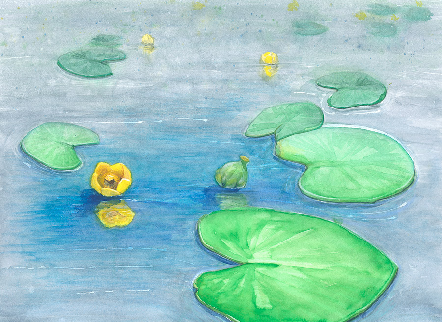 yellow pond-lily water color painting
